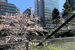 東京 イメージ